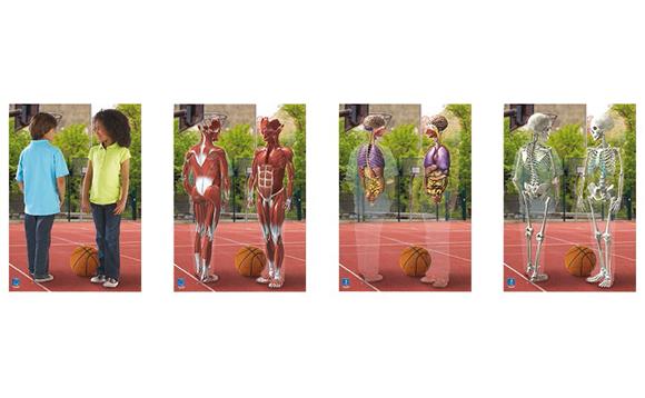Affiche lenticulaire de l 39 int rieur du corps humain for Interieur corps humain